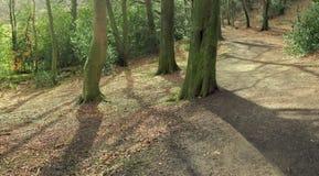 słoneczne lasu Zdjęcie Stock