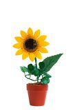 słonecznik Zdjęcie Stock
