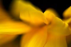 słonecznik abstrakcyjne Obrazy Stock