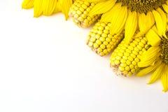 Słonecznik i kukurudza Zdjęcie Royalty Free