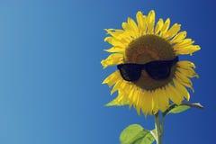 Słonecznik i niebieskie niebo, rocznika filtr Fotografia Royalty Free