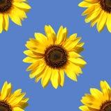Słonecznik jak bezszwowego wzór Obrazy Royalty Free