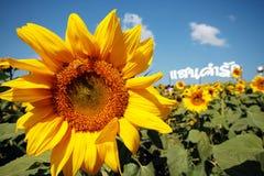 Słonecznik na jasnym niebie zdjęcie royalty free