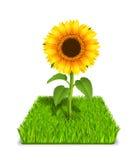 Słonecznik w zielonej trawie Fotografia Royalty Free