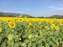Słonecznika gospodarstwo rolne Zdjęcia Stock