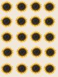 Słonecznika wzór Obraz Royalty Free