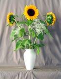 słoneczniki 1 Zdjęcia Royalty Free