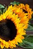 Słoneczniki na drewnie Zdjęcie Stock