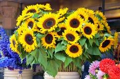 Słoneczniki przy rynkiem Obrazy Royalty Free
