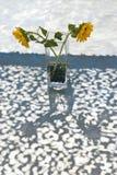 słoneczniki wazowi Fotografia Royalty Free