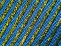 Słoneczny planu widok Obraz Stock
