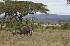 słoni park narodowy serengeti Tanzania Zdjęcia Stock