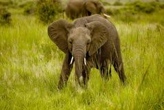 słoni potomstwa zdjęcie royalty free