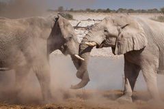 słoni target1038_1_ Obrazy Royalty Free