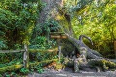 Słonia drzewo Obrazy Royalty Free