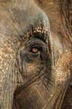 Słonia oko Zdjęcia Stock