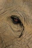 Słonia oko Zdjęcie Royalty Free