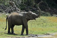 Słonia opryskiwania woda na ja i brud Zdjęcie Stock