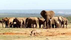 Słonia park narodowy Obrazy Royalty Free
