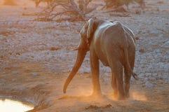 Słonia spacer przy waterhole Fotografia Stock