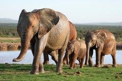 słonia waterhole Zdjęcie Stock
