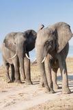 2 słonie Zdjęcia Royalty Free