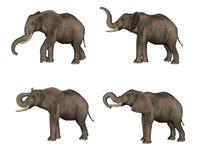 słonie Obraz Royalty Free
