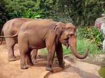 słonie Zdjęcia Royalty Free