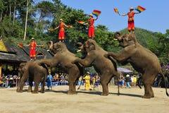 Słonie jako Turystyczny Attractionï ¼ Chiny Fotografia Royalty Free