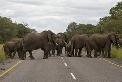 Słonie na drodze Zdjęcia Stock
