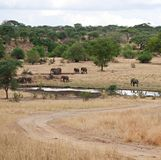 Słonie na Tarangiri-Ngorongoro safari w Afryka Obrazy Stock