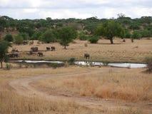 Słonie na Tarangiri-Ngorongoro safari w Afryka Zdjęcie Stock