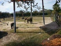 Słonie przy zoo Obrazy Stock