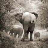 Słonie, rocznika styl Zdjęcie Royalty Free