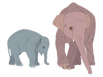 słonie rodzinni Zdjęcie Royalty Free