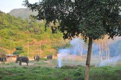 Słonie w Koh Chang Fotografia Royalty Free