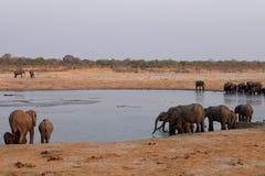 Słonie w sawannie Zimbabwe obrazy stock