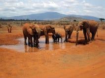 Słonie w Tsavo Zdjęcia Royalty Free