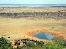 Słonie w Tsavo Obrazy Stock