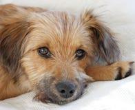 söt hund Royaltyfria Bilder