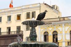 Sęp w fontannie Zdjęcia Stock