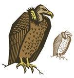 Sępa ptaka wektor Ilustracji