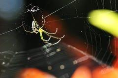 s pająka sieć Zdjęcia Royalty Free