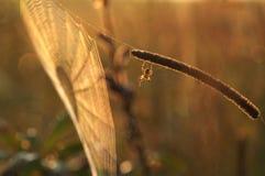s pająka sieć Zdjęcia Stock