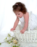 It's a Peep!. Baby girl in wicker basket looking at chick in front of white background with flowers on floor Stock Photography