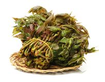 It`s a a pile of Chinese toon sprouts. It can make a variety of dishes, not only rich in nutrition, and has a high medicinal value Royalty Free Stock Images
