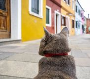 ` S Point of View del gato fotos de archivo