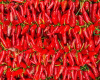 S/poivron rouges photographie stock libre de droits