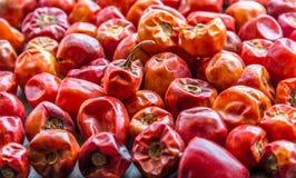 S/poivron rouges secs Image libre de droits