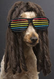 80's Poodle With Dreads Stock Images